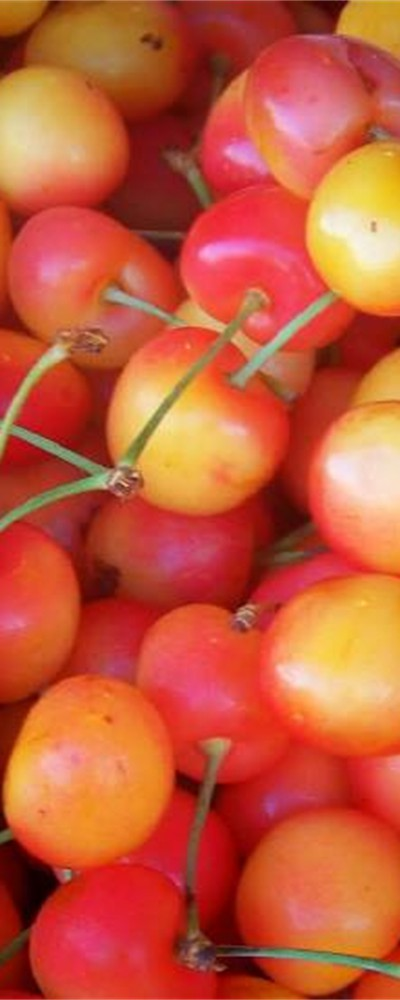 Rainier Sweet Cherries